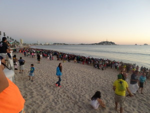 Lots of people showed up to release baby turtles into the sea, here in Mazatlan.